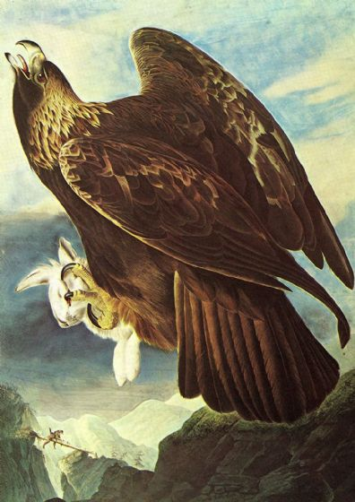 Audubon, John James: Golden Eagle. Ornithology Fine Art Print/Poster. Sizes: A4/A3/A2/A1 (001115)